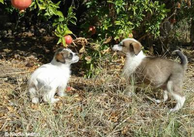 Hundewelpen auf Lesbos