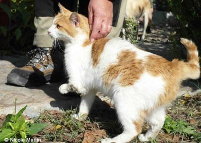 Auch diese Katze konnte geholfen werden.