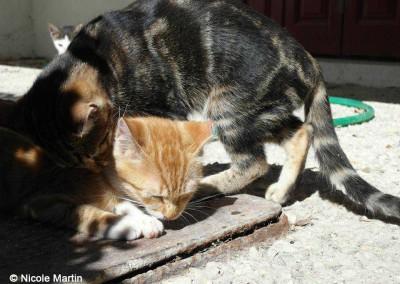3 junge Katzen