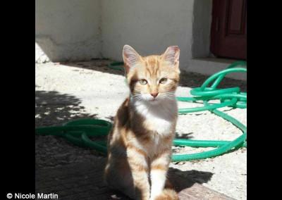 Eine der 3 jungen Katzen kastriert, mit abgeschnittener Uhrspitze