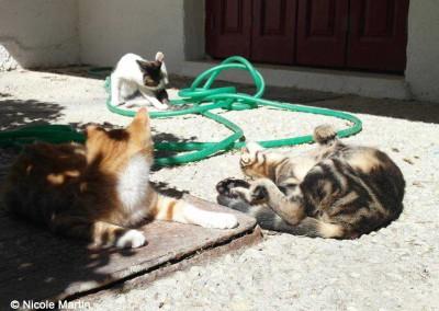 Die 3 jungen Katzen.