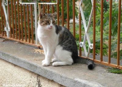 Katzen auf Lesbos, hier eine kastrierte Katze