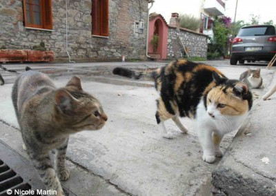 Katzen auf Lesbos, kastriert, zu erkennen an der abgeschnittenen Ohrspitze