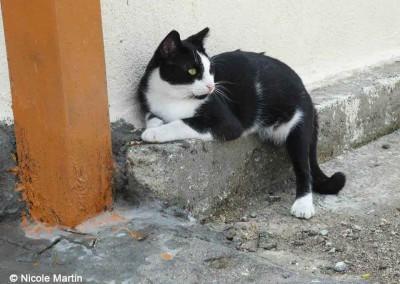 Katze auf Lesbos