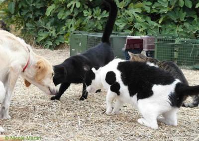 Katzen und Hunde auf Lesbos