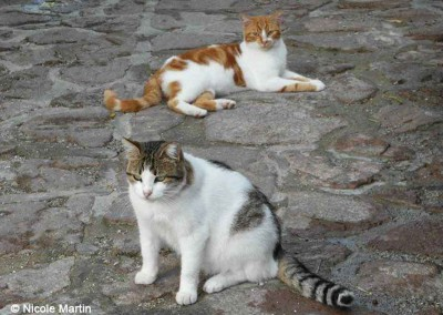 Katzen auf Lesbos