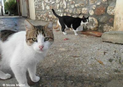 Katzen auf Lesbos - kastriert mit abgeschnittener Ohrspitze