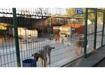Hunde in der Tuerkei