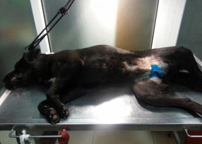 Hunde Kastration in der Tuerkei