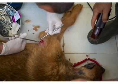 Medizinische Versorgung der Hunde der Station.