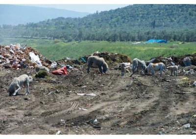 Müllkippe, die zufällig auf der Fütterungstour entdeckt worden ist.
