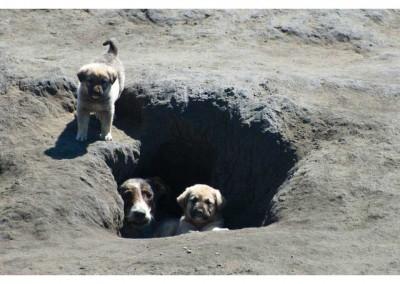 Unzählige Hunde, daruntere auch viele Mütter mit Welpen.