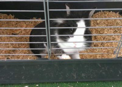 Kaninchendame-Lykka - Abholung