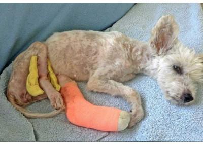 Da das zweite Bein schlecht heilte, musste sie nochmals operiert werden und bekamt dann einen Fixateur externe.