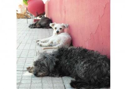 Zweiter Kastrationsstop in Portugal bei einem privat finanzierten Tierheim. Es konnten 32 Tiere (Hunde, Katzen) kastriert werden.