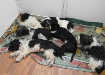 30 Hunde, alle miteinander verwandt