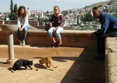 Strassenkatzen in Granada