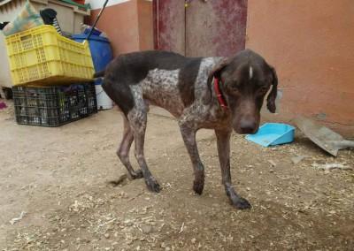 Dieser Hund war schon kastriert, hat aber eine Infusion bekommen, da er krank ist.
