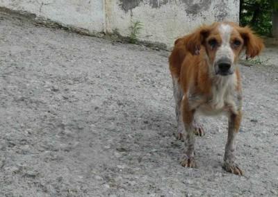 Dieser Kleine hat leider die Leishmaniose. Im Tierheim wird er behandelt und darf dort seine Zeit verbringen. Ist ein ganz lieber Hund.