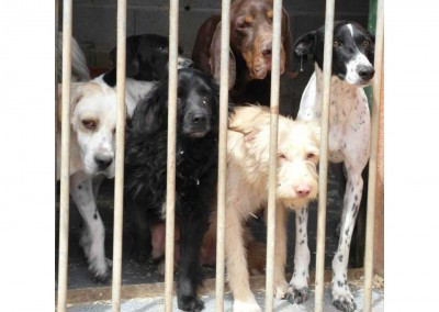 Hunde in Spanien2014