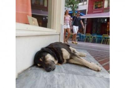 Athens Strassentiere