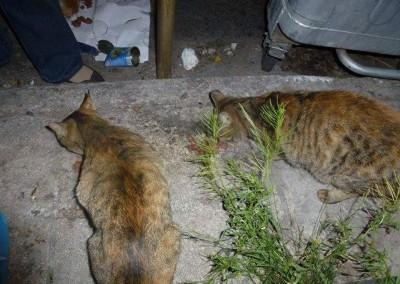 Fütterung der Strassentiere in Athen