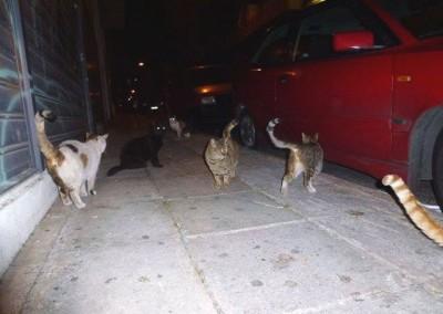 Katzen in Athen