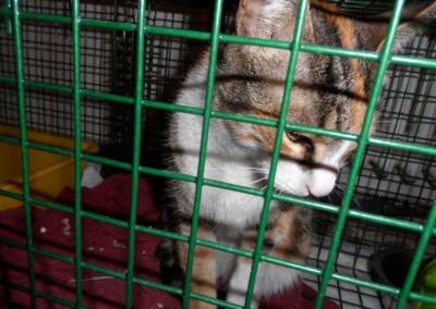 Kastrationen Straßenkatzen