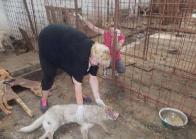 Städtisches Shelter....ein gebrachter Hund wurde beim Ausladen von einem Dogcatcher durch brutales Handling mit der Schlinge verletzt.