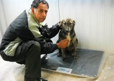 Tierbesitzer bringen ihre Tiere zur Kastration