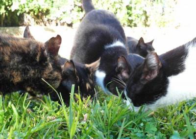 Die Anwohner füttern die Katzen täglich.