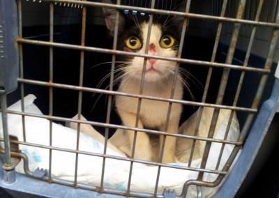 Die Kastrationskandidaten. Bei allen Tieren handelt es sich um Katzen die auf der Straße leben.r 30 Hafenkatzen