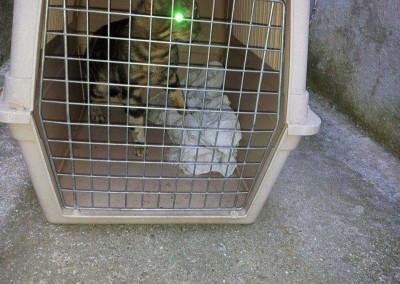 Die Kastrationskandidaten. Bei allen Tieren handelt es sich um Katzen die auf der Straße leben.