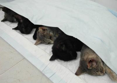 Fertig und schön auf einer Wärmematte liegend bis sie wach werden