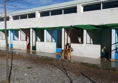 Auslauf des spanischen Tierheimes für die Hunde