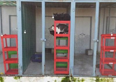 Katzenbereich Außen (Stand: Mai 2014) - mittlerweile verbessert und verschönert