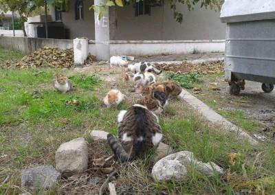 Türkei, Burhanyie November 2014