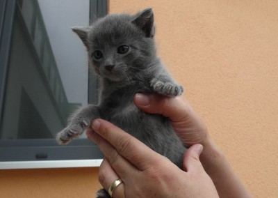 Katzenwelpen aus Bayern