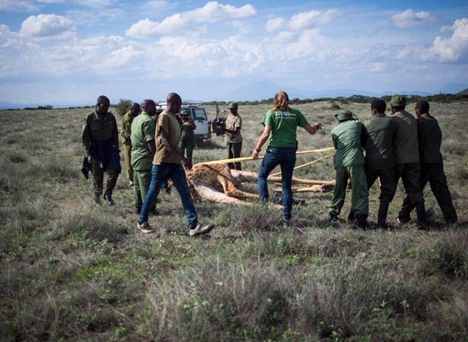 Afrika (Tansania), Januar 2019